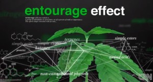 Entourage Effect drawing over cannabis leaf
