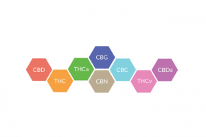 colorful hexagons with different cannabinoid abbreviations