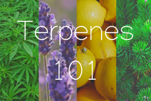 """Picture with letterings of """"Terpenes 101"""" superimposed over a collage of hemp leaves, lavender, lemons, & pine leaves in a column layout"""