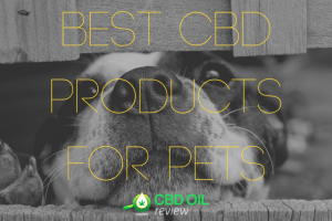 """Vector Graphic lettering of """"BEST CBD PRODUCTS FOR PETS"""" supermiposed over an image of a dog's face"""